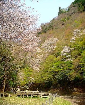 freshgreen_park.jpg