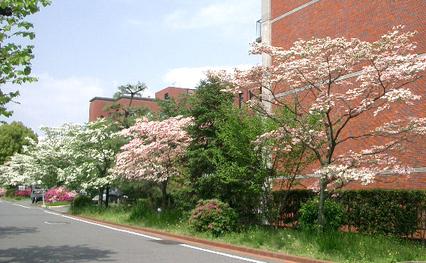 Hanamizuki1
