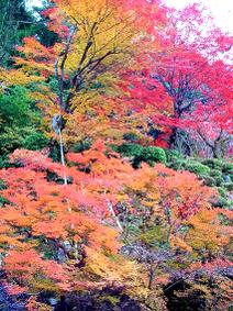 Kongourinji_garden1