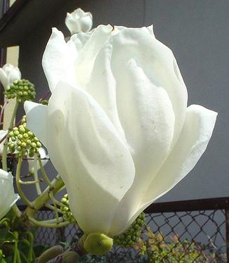 White3_2
