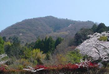 Spring_sunshine3