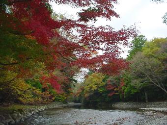 Isuzu_river1