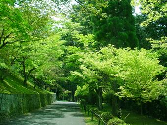 Green_path51