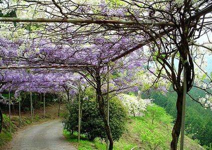 Fujiwhite_road