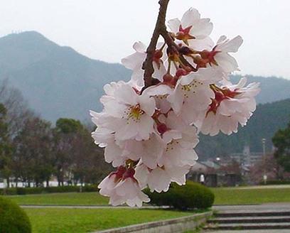 Spring_has_come_2