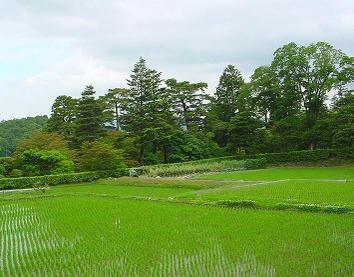 Tanadashimorikyu1