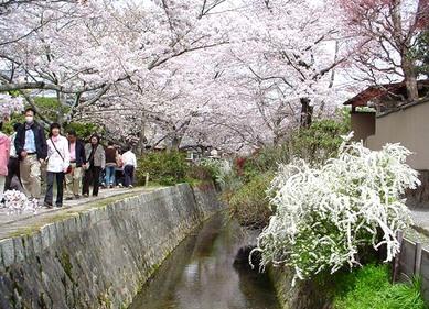 Yukiyanagi